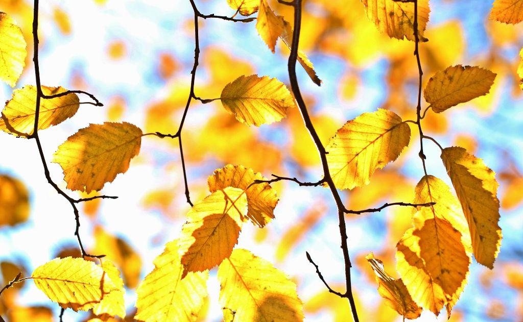 autumn-1042346_1920
